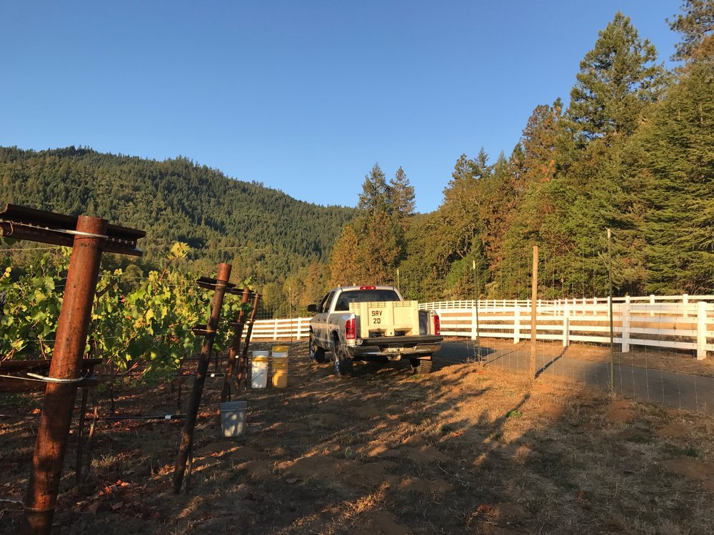 Photo of truck full of grapes in vineyard