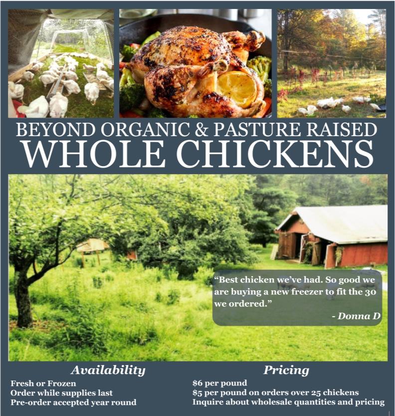 SCF_Chicken_Poster_v02-3.jpg