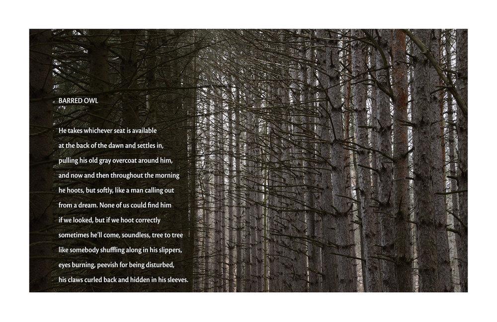 a barred owl poem