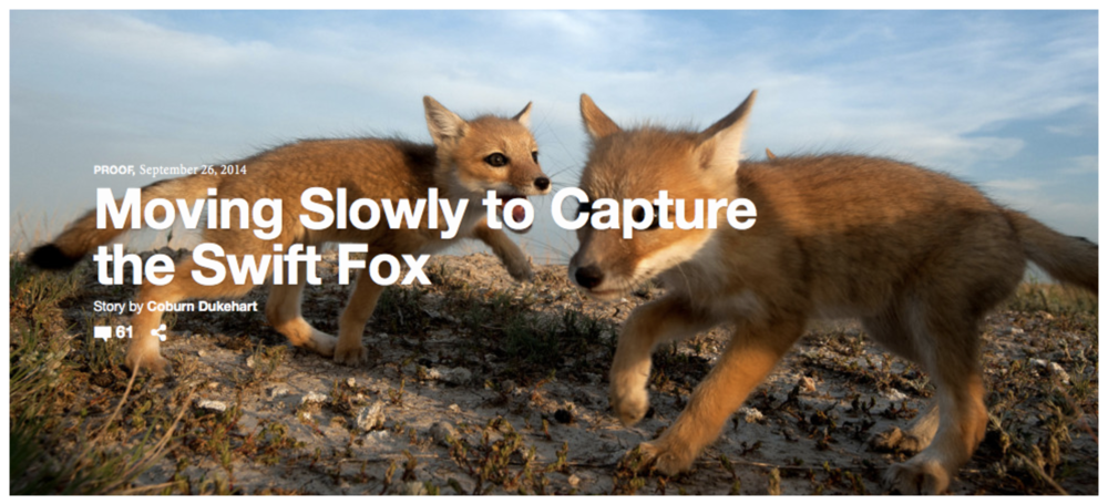 Moving Slowly to Capture the Swift Fox.  PROOF by National Geographic. Featuring Mike Forsberg and his work in South Dakota's Buffalo Gap National Grassland.