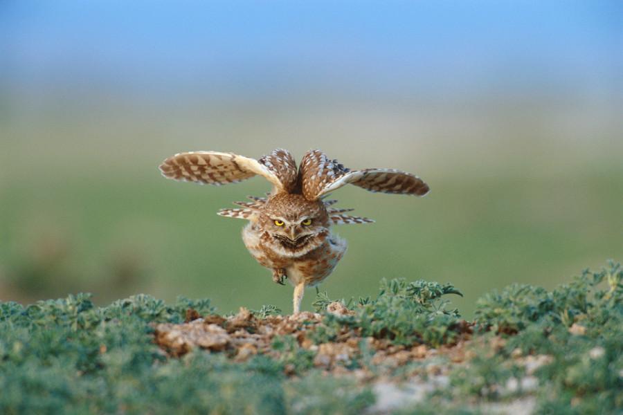 michael-forsberg-owl-900x600.jpg