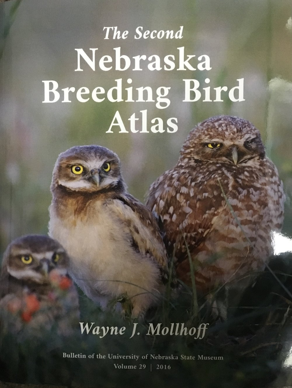 Michael's photo of burrowing owls is the cover photo for the Second Nebraska Breeding Bird Atlas by Wayne J. Mollhoff.