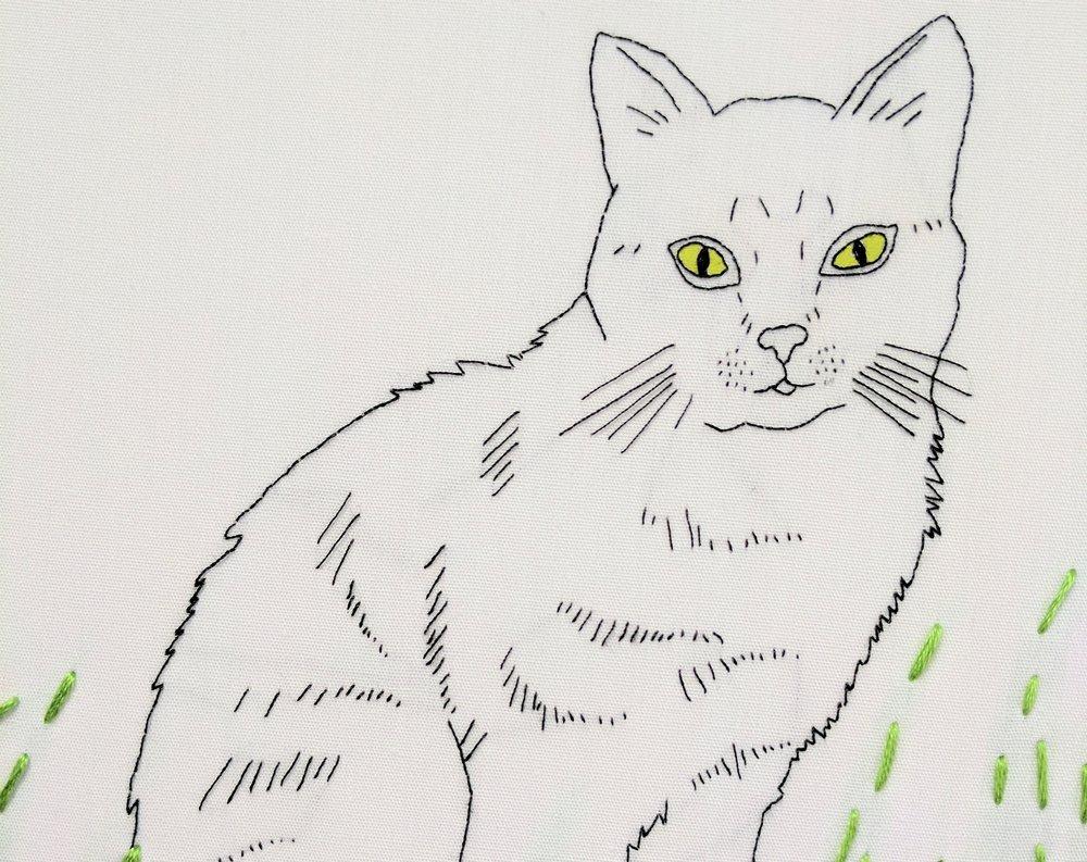 cat super close up.jpg