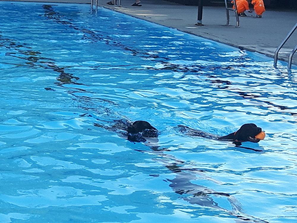 Dog Swim 20170921_170608.jpg