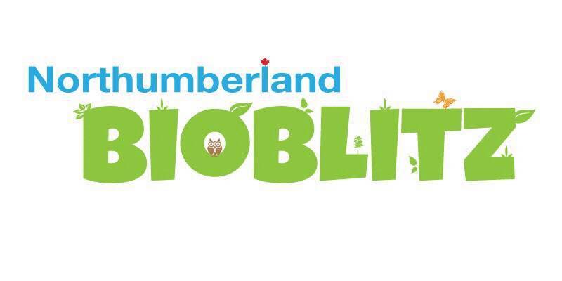 Northumberland BioBlitz logo.jpg
