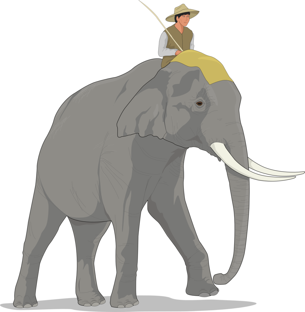 Who's in charge? The elephant or the rider?