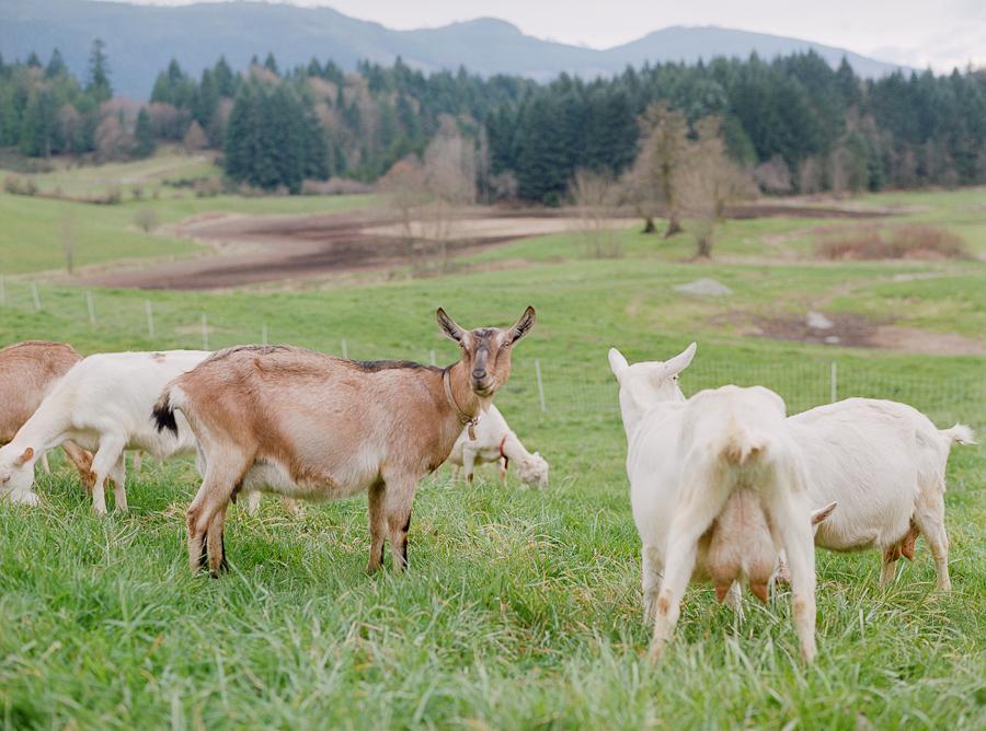 pasture web-19.jpg