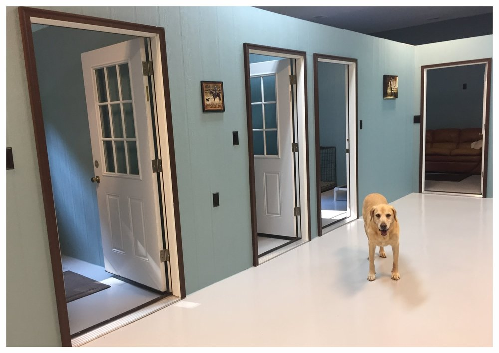 Accommodations And Rates Hazel Valley Dog Boarding