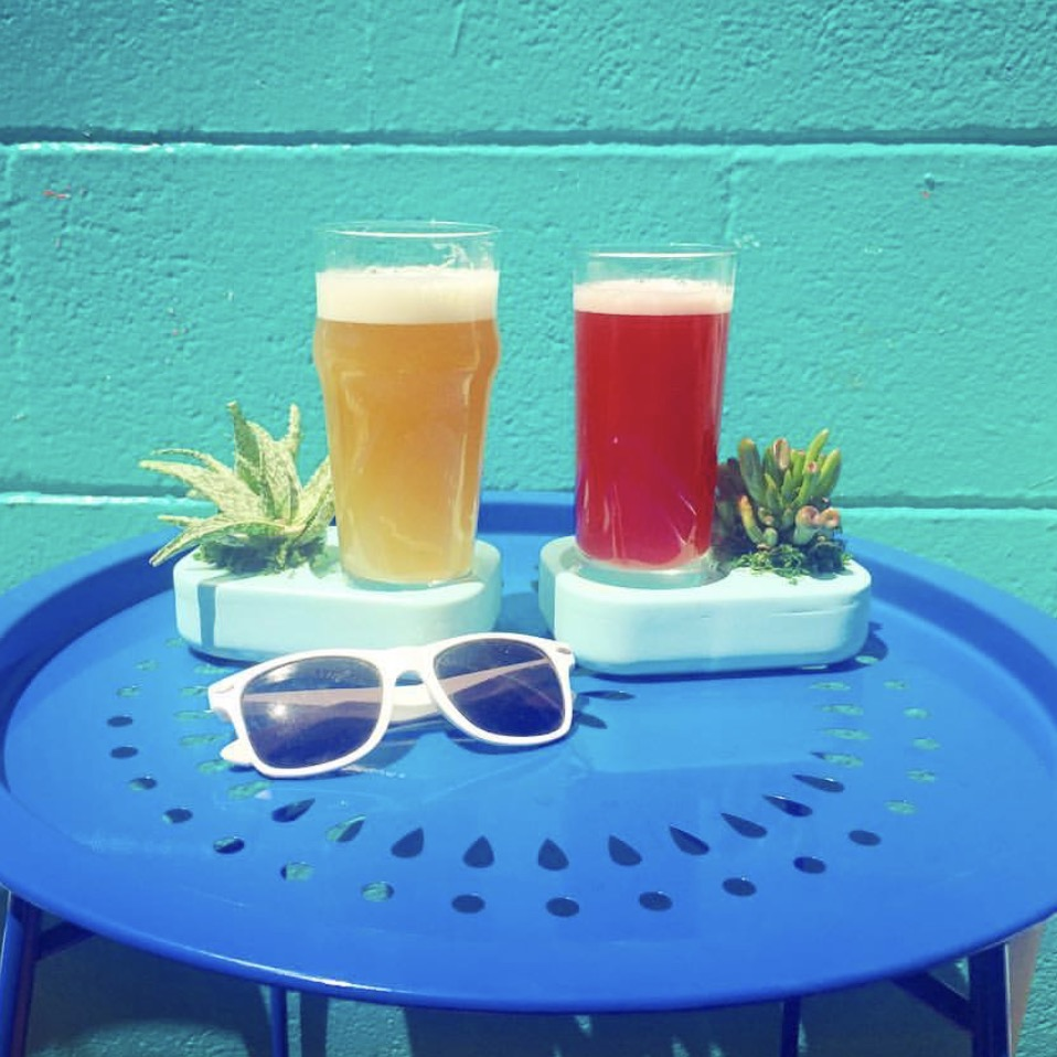 Oasis Coasters - These tabletop beverage holders are also self-watering succulent planters!Drink up;condensation is the only requirement for happy healthy plants in this novel invention by ZerOasis (TM) Founder,Martha Breed.