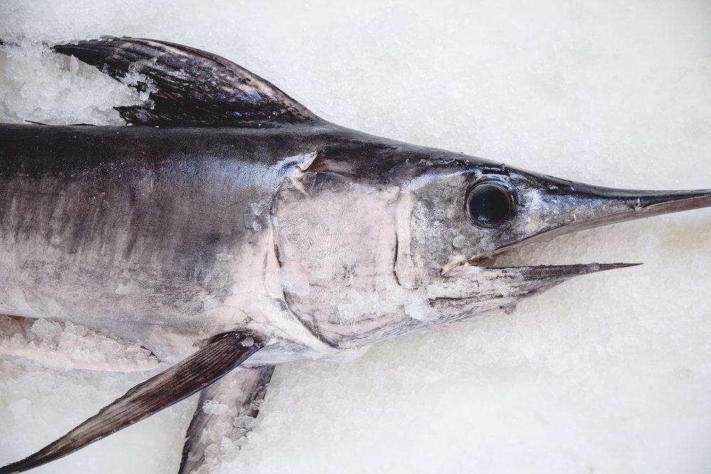 Swordfish -