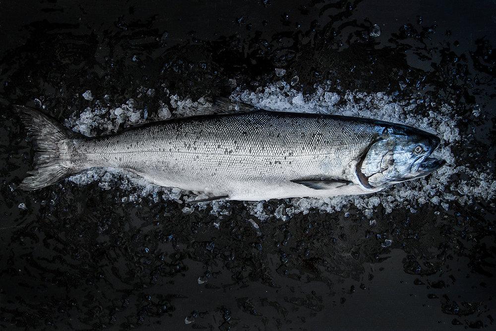 Salmon -