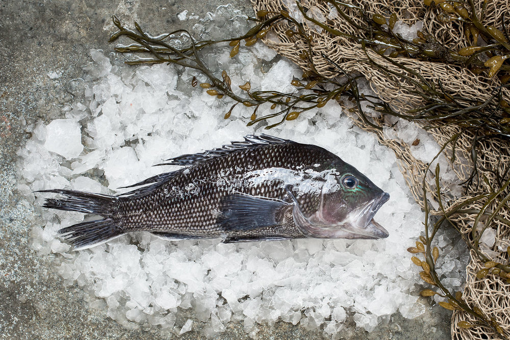 Local Headfish -