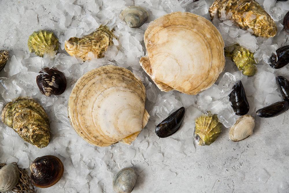 Shellfish -