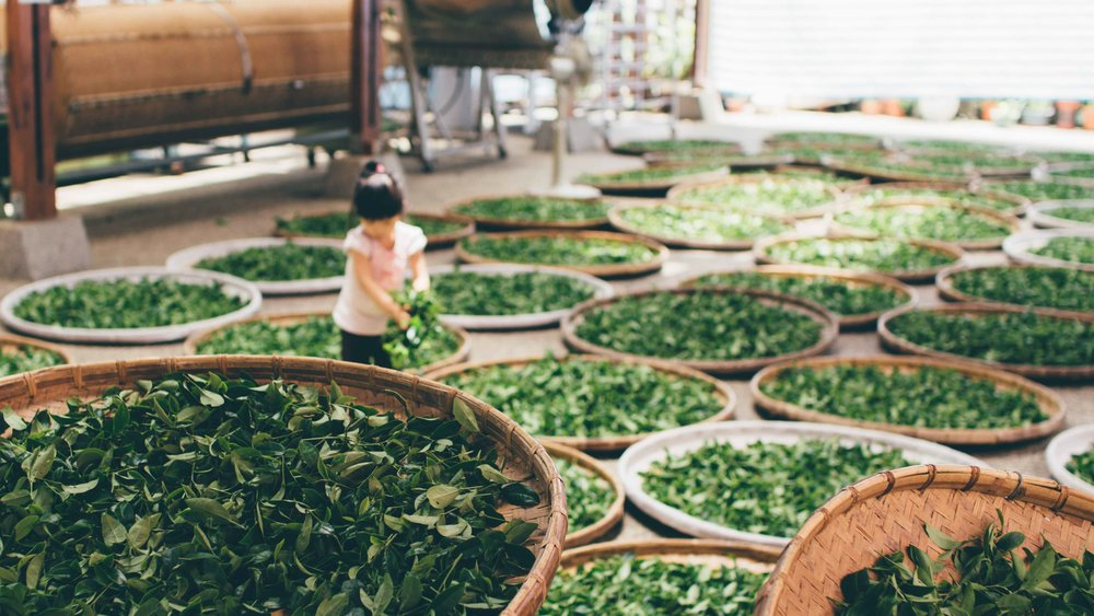 drying-tea-leaves.jpg