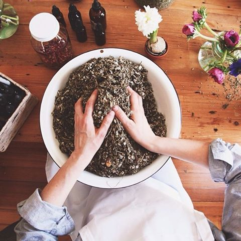 Getting inspired to share common applications of herbal medicine that's useful in everyday life at our evening workshop tomorrow at @assembly.toronto 🍃✨ 📸 #herbalacademy #plantmedicine #herbalism #selfcare #community 💕