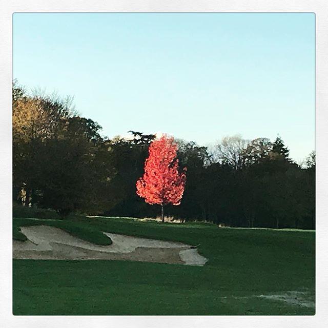 Magic Autumn !! - #golf #golfer #golfpro #golf3 #golfing #golf1 #golfislife #womenwithdrive #golfbabes #taylormadegolf #iphone #legsout #golfchannel #golfday #wwd #golfers #golfstagram #golfporn #golf7 #golfcart #babesofinstagram  #porsche #hissalot #repost #golfboss #golf #golfaddict #swing#cover#⛳️