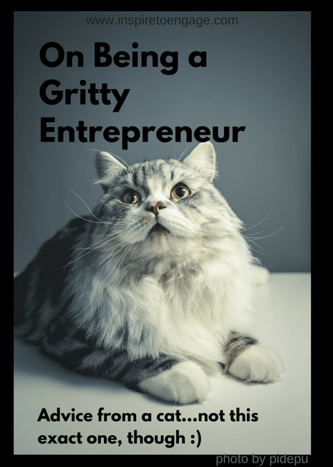 being a gritty entrepreneur advice from a cat