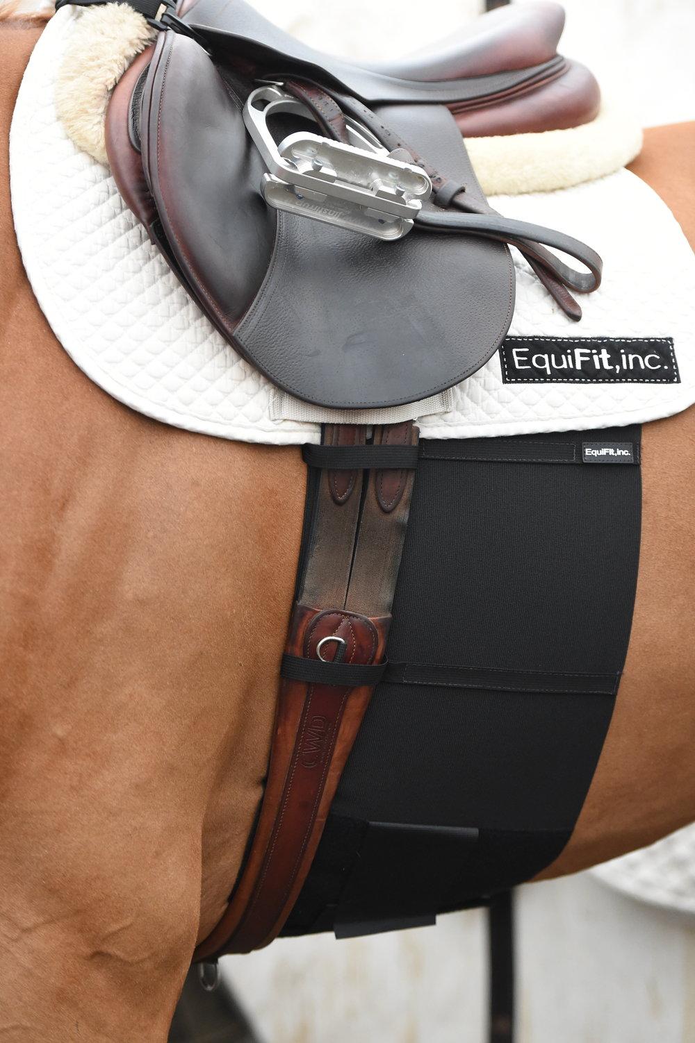 BellyBand on Horse - 02018.jpeg