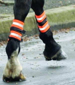 leg boots 2.jpg