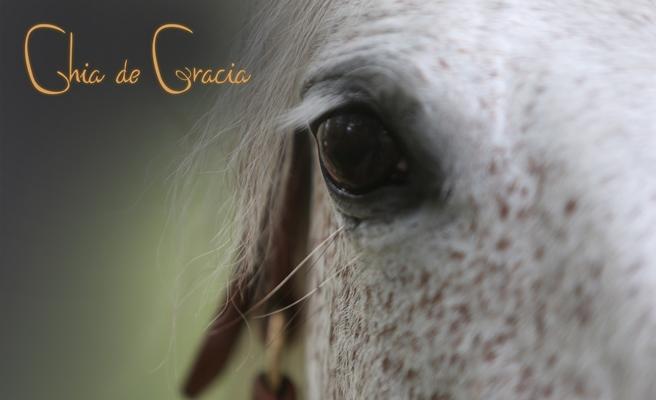 cdg Gracia eye.jpg