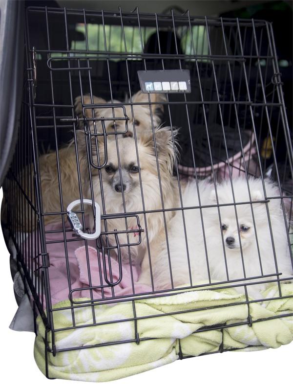 Dogs cage LOOP LOCK s.jpg