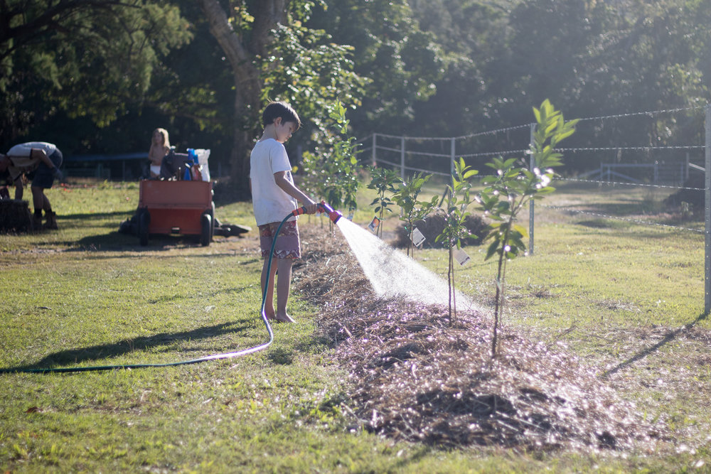 Then we put a thick layer of mulch over it and watered it in.