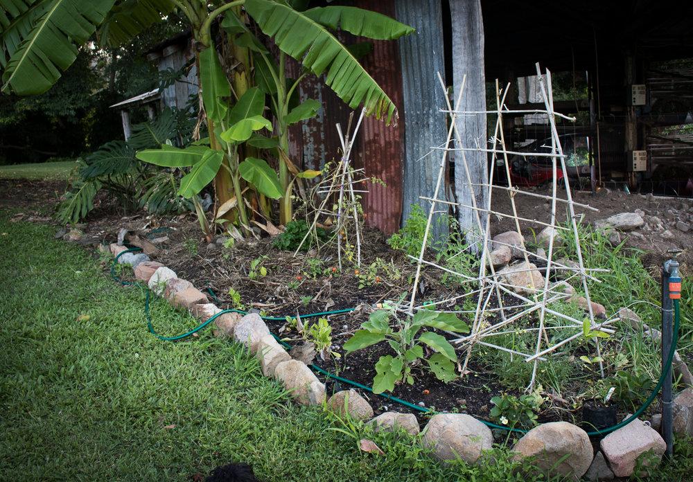 herbgarden (1 of 1).jpg