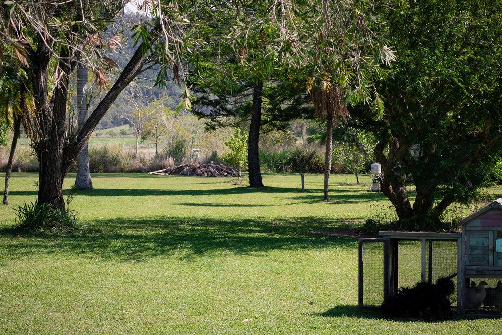 lawn (1 of 1).jpg