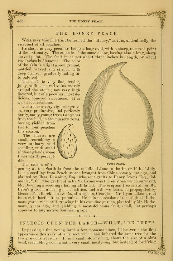 Reprinted from  The Horticulturist, and Journal of Rural Art and Rural Taste, Volume 13,  1858