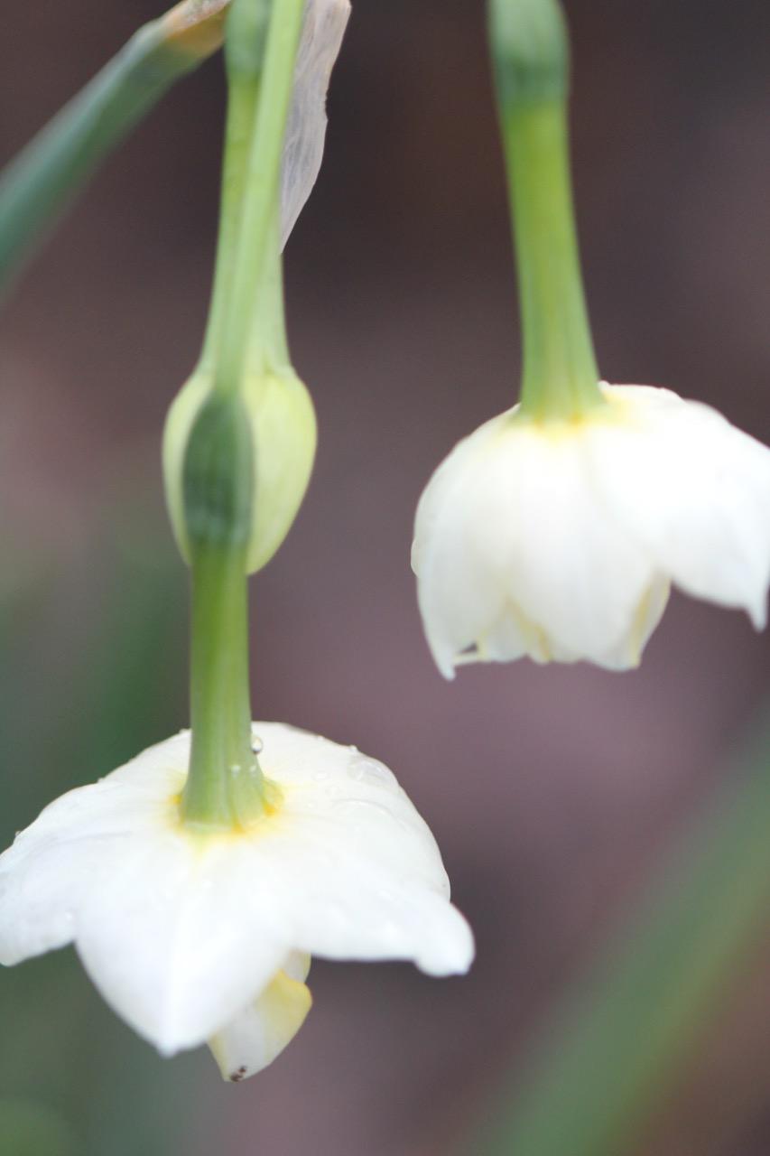 orchid - 1.jpg