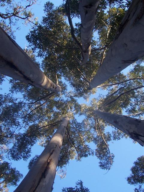 trees - 1.jpg