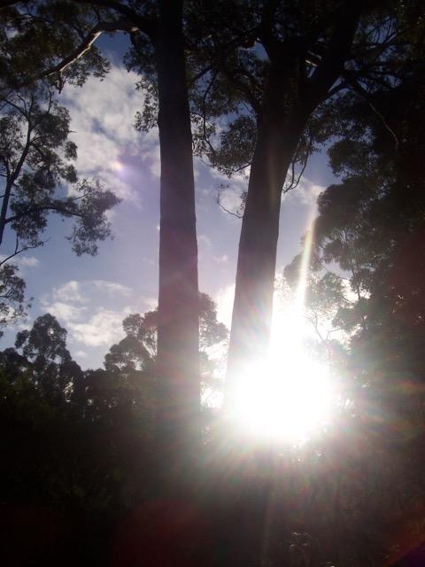 trees - 2.jpg