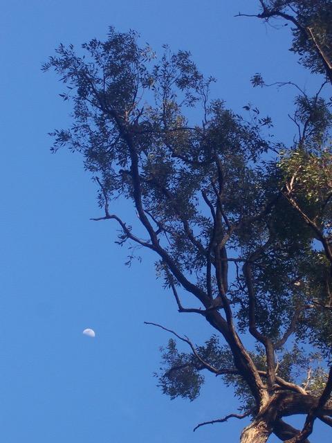 trees - 3.jpg