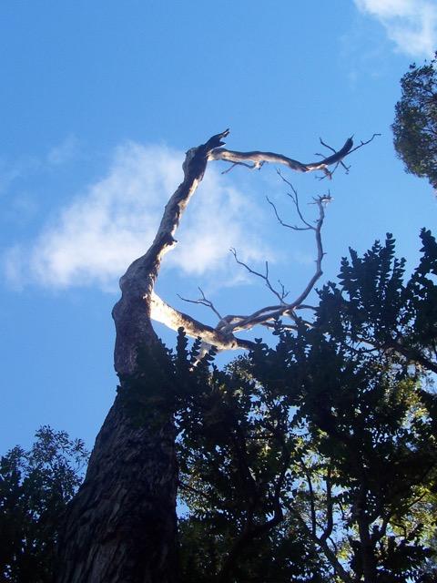 trees - 4.jpg