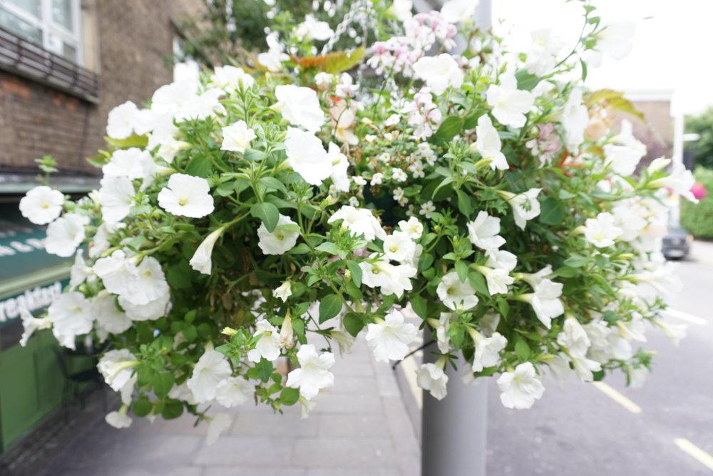 White in Duke of York Square