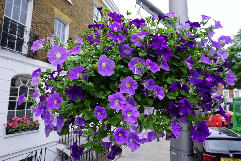 Purples around World's End