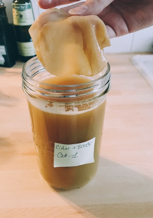 Placing a Scoby into a fresh raw batch of cider