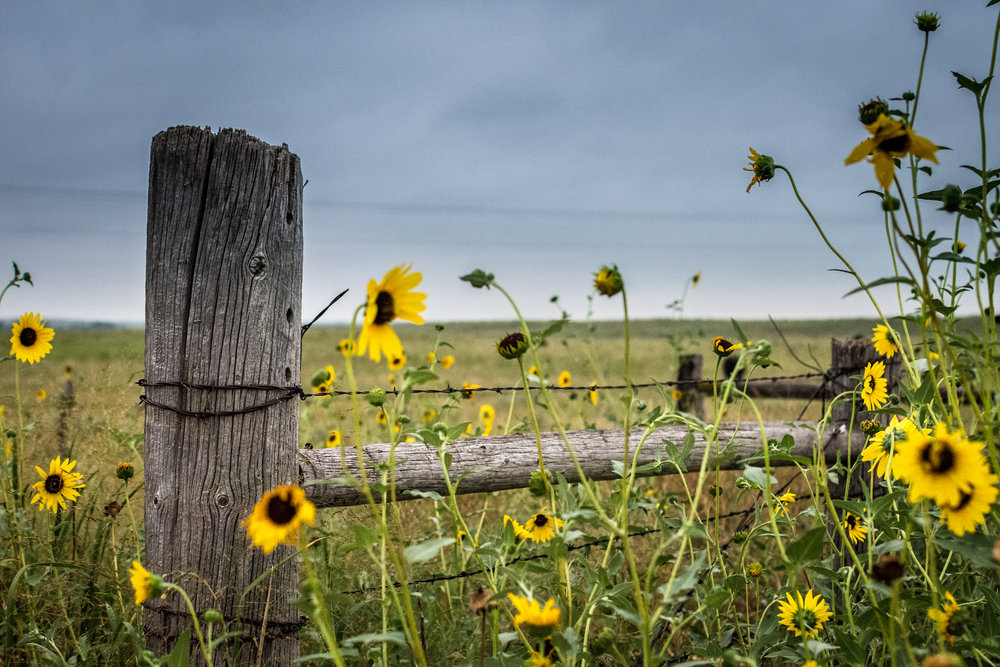 Fence Flowers.jpg