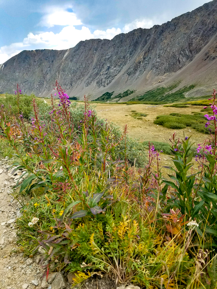 Toward the bottom, the wildflowers and summer were still hanging on.