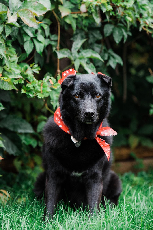 Charlie-Dog Spa.jpg