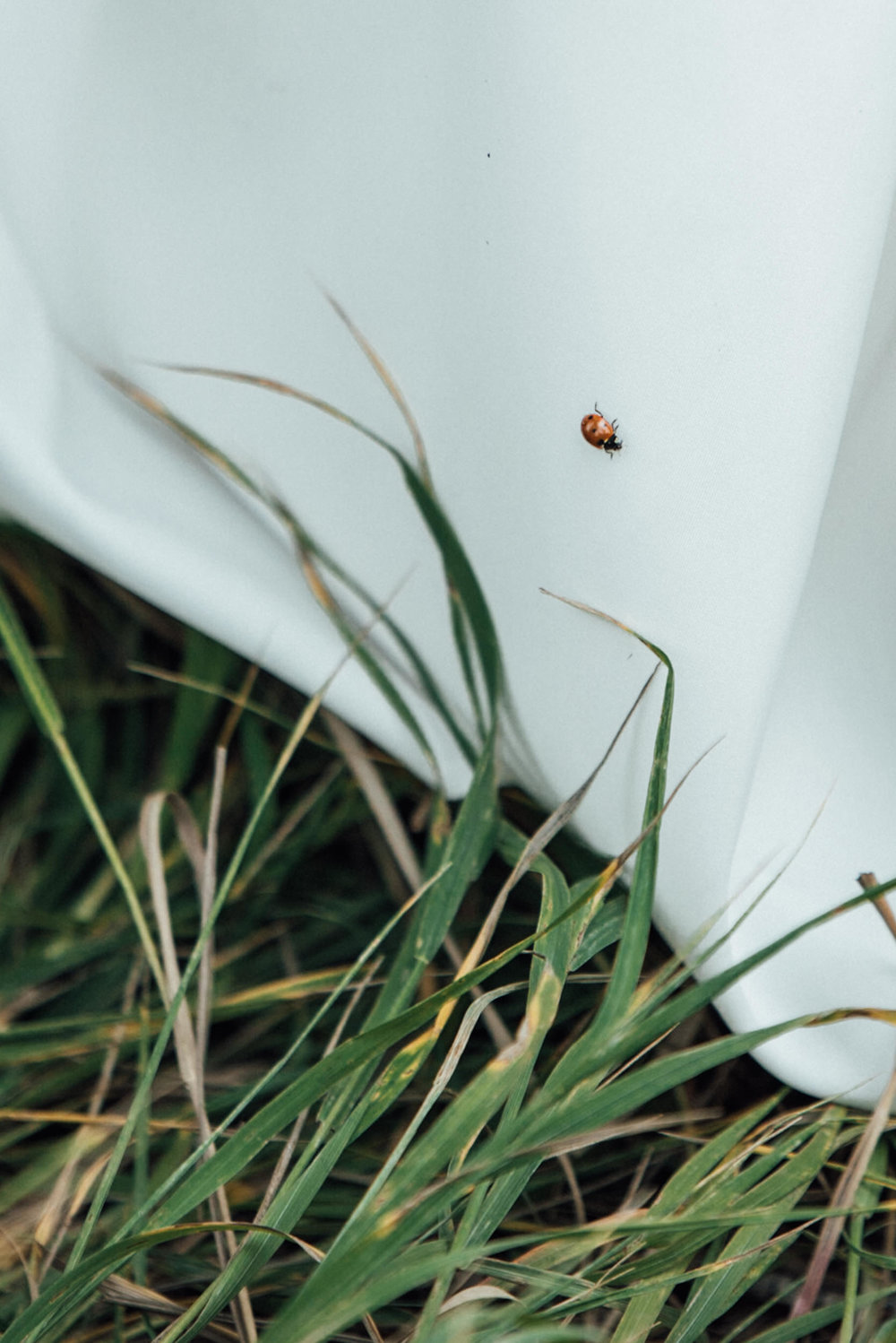 Lucky ladybug at t beautiful Colorado wedding photographer