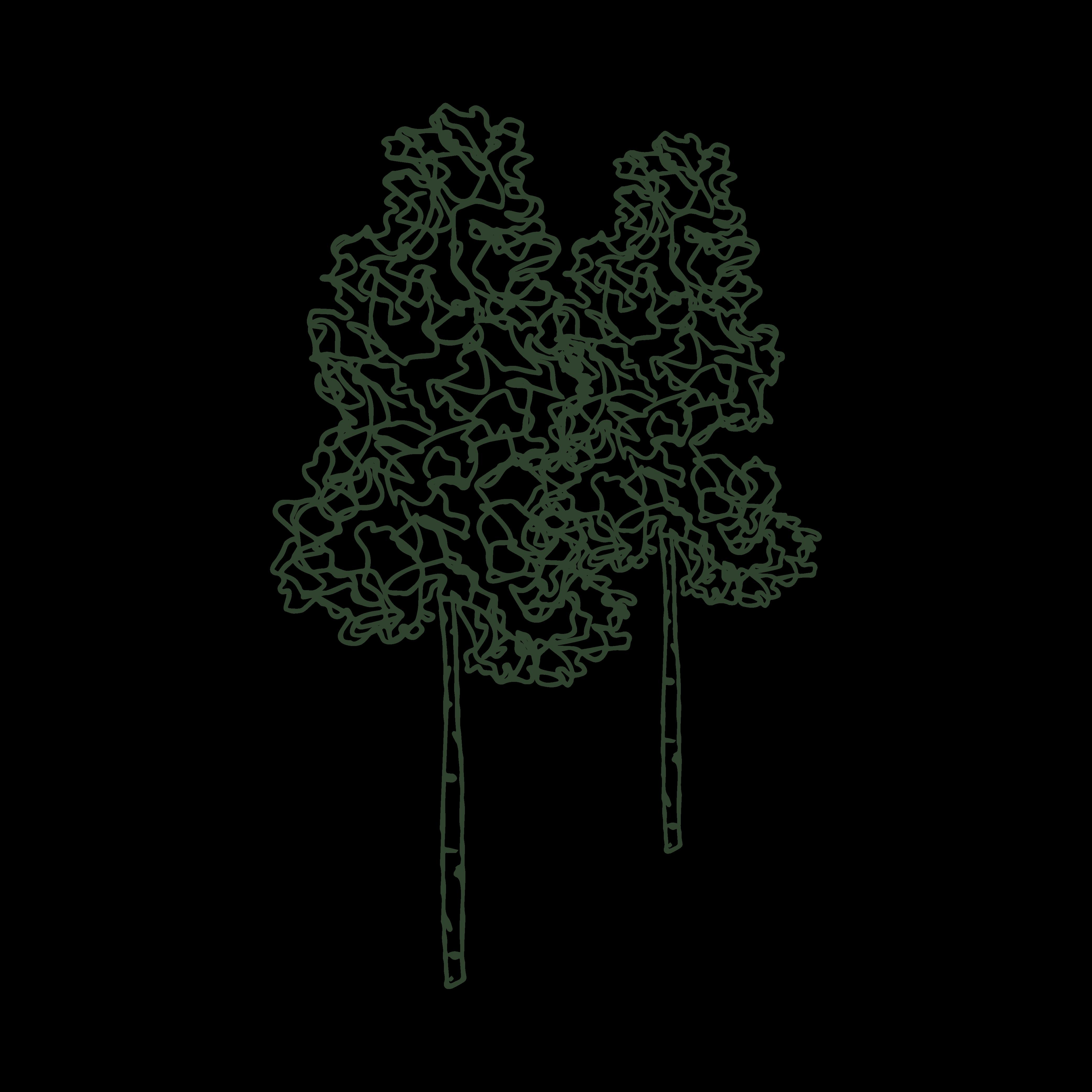 Tree-Mark%E2%80%94+Aspen