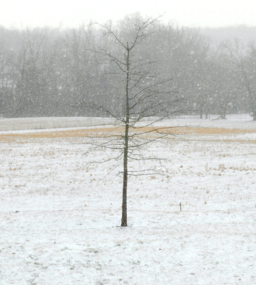 SnowTree seth tummins.jpg
