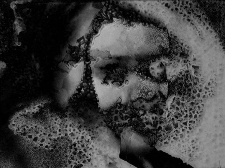 Jenny Haniver  (2014)