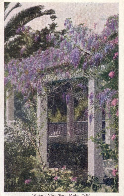 1930_sm_wisteria_vine.jpg