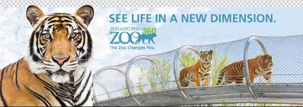 Tiger Creative Concept