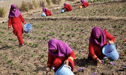 women working on farm2.jpg