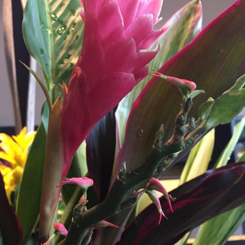 Não parecem micro passarinhos, no lugar de flores?