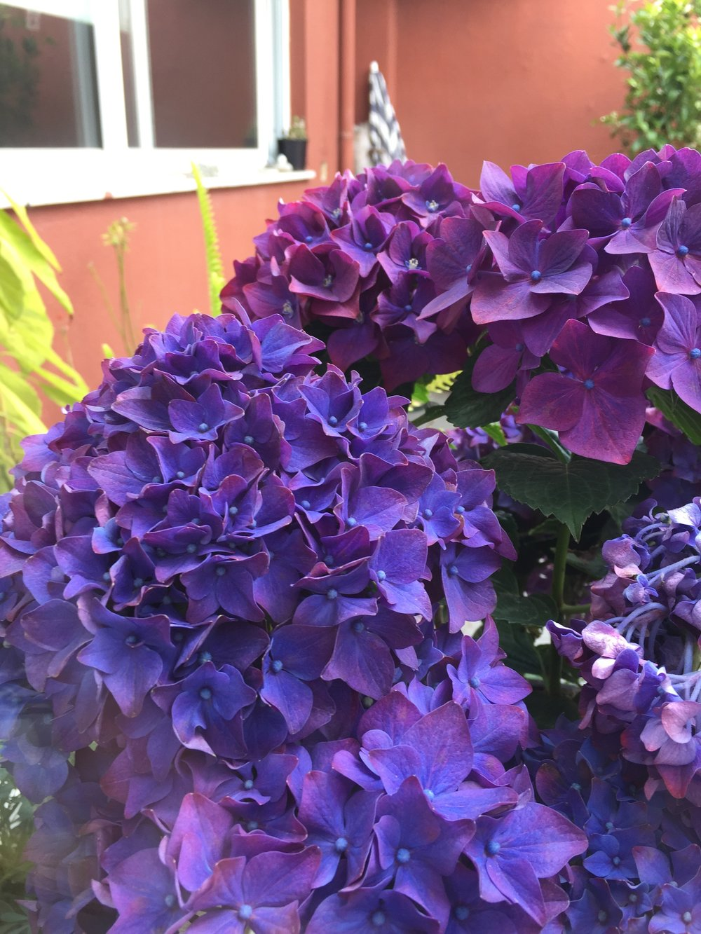 Flores nao podem faltar