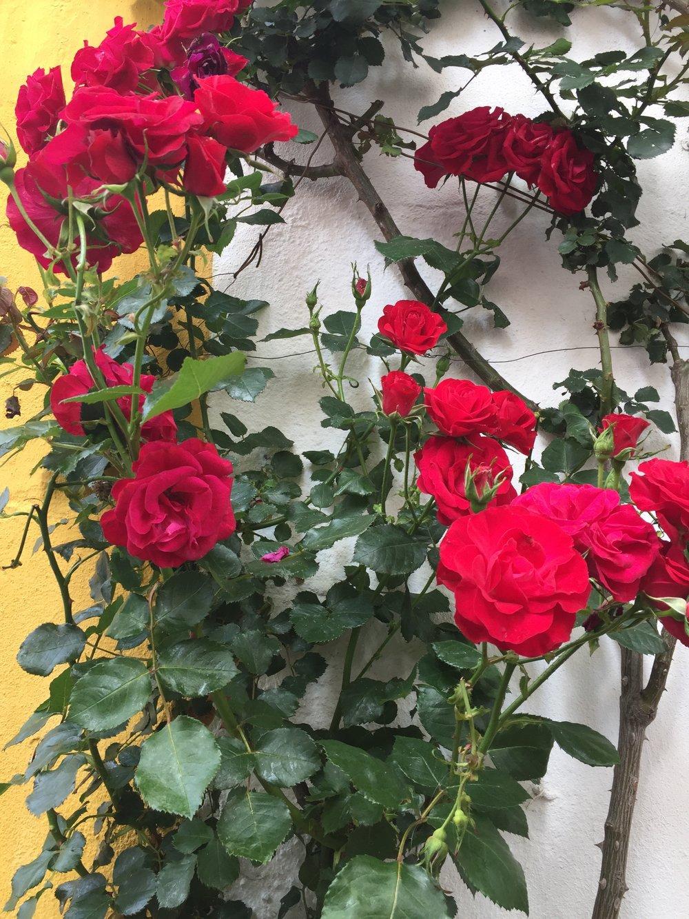Flores por toda parte...